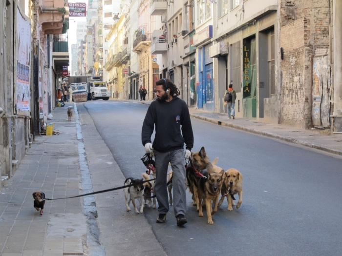 Early morning Buenos Aires - Dogs Rule !!!